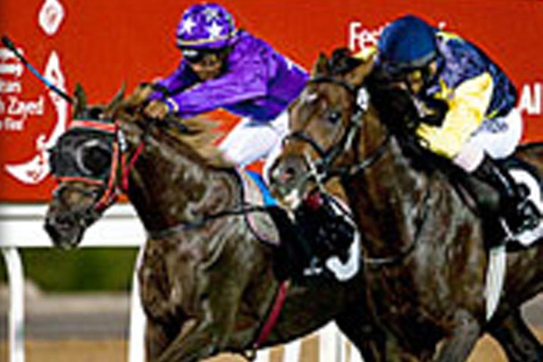 Abu Dhabi Equestrian Club Fibresand International
